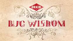 Bug Wisdom