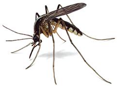Top mosquito cities
