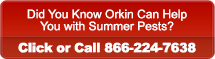 Did You Know Orkin Can Help with Summer Pests? Click or Call 866-224-7638